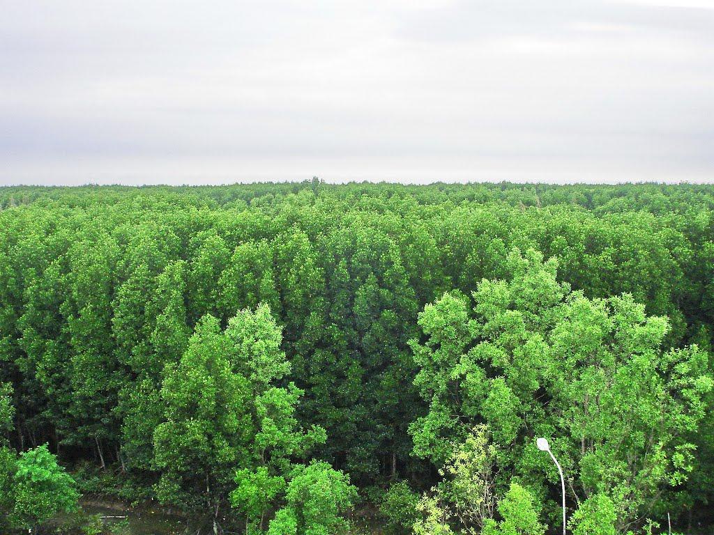 Hình ảnh Khu rừng Đước