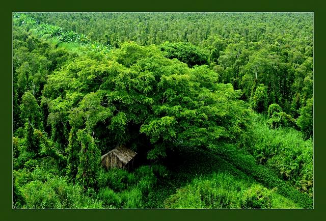 Hình ảnh Rừng U Minh