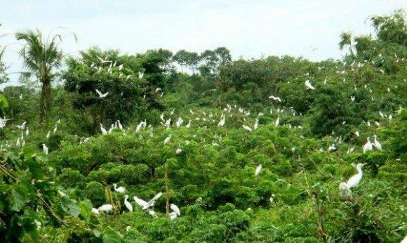 Hình ảnh mô tả Vườn chim Cà Mau