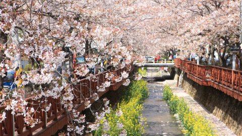 Những lễ hội hoa quốc tế khoe sắc hấp dẫn tại Hàn Quốc