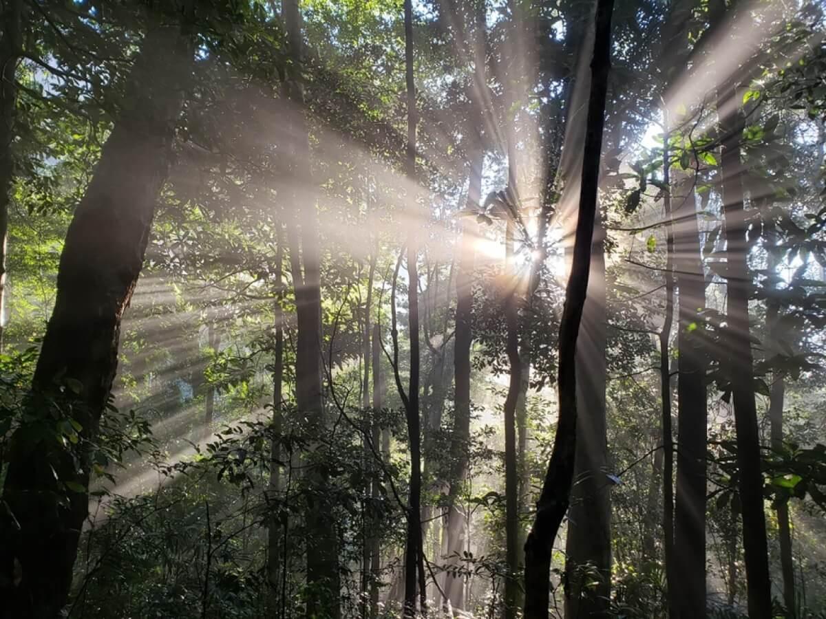 Khu dự trữ sinh quyển thế giới ở Việt Nam
