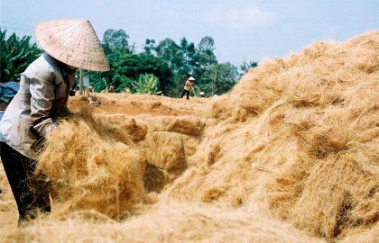 Làng nghề Xứ Dừa Bến Tre