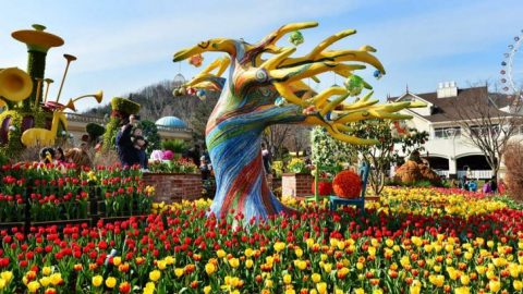 Lễ hội hoa Tulip ở Hàn Quốc Korea